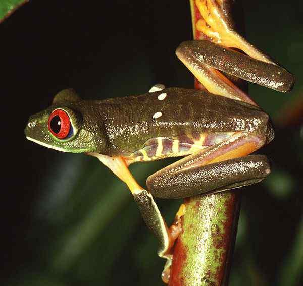 热带雨林的生活 生活在亚马逊热带雨林的生物